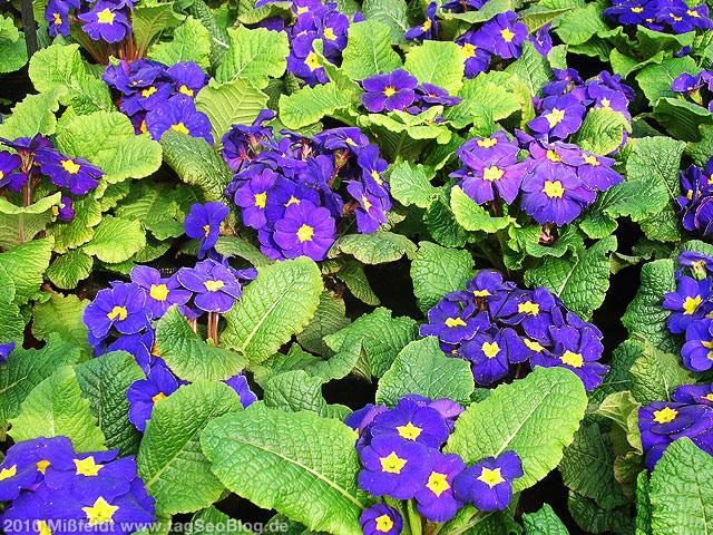 Blaue Blumen als Muttertagsgeschenk