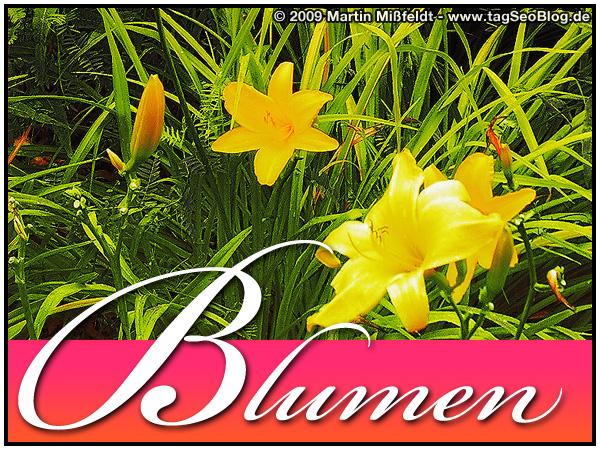 Blumen zum Valentinstag :-)