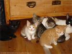 Katzen-Kinder