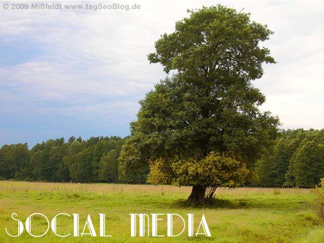 Social Media - ein starker, saftig grüner Baum