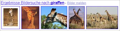 Screenshot Bildformat Universal-Search: Giraffen-Bilder