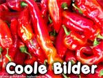 Coole Bilder-Rezepte