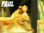 Krake Paul (Oktopus) - Orakel und WM-Experte